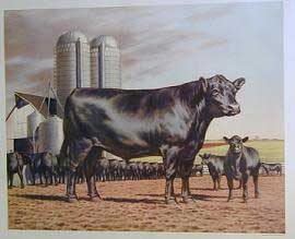Framing Prints - Angus Steers